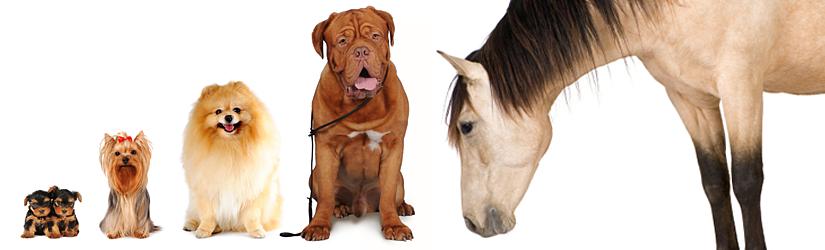 HorseDogChiro Animal Chiropractic